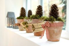 pine cone in a pot with ribbon.. bing search result. easy diy.