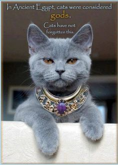 Russian Blue...need this collar!!