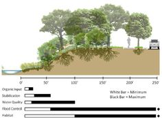 This image shows the various buffer widths associated with riparian zone function.