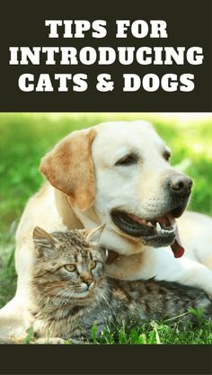 Discover how to introduce cats and dogs to have the highest chance of them getting along and living peacefully together in the same home.