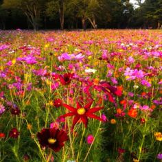 Wildflowers, John Bryan State Park, Yellow Springs, Ohio