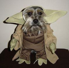 Roxy's next Halloween costume!!!