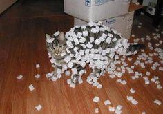 DEFINITELY something my cat would do.
