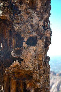 dead cactus in arizona