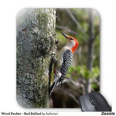 Woodpecker - Red Bel