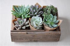 #host #favors mini succulents