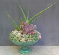 This beautiful glass pedestal Succulent Centerpiece was created by Succulent Designs.