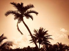 Costa Rica's beaches