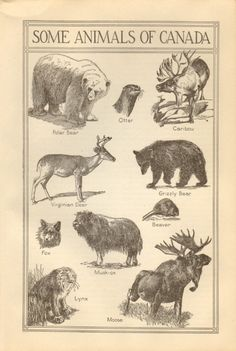Vintage Animal Identification Page, Canadian Animals Book Plate,  Black and White Some Animals of Canada