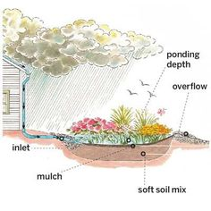 How a Rain Garden Works While they may seem just like pretty little front-yard flower beds, rain gardens function like mini forests by soaking up and filtering rainwater runoff Rain Garden Design, Garden Works, Dry Creek, Plantation, Flower Beds, Dream Garden, Garden Planning, Garden Projects, Garden Tips