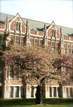 University of Washington cherry blossoms tour