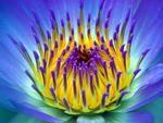 Images de fleurs - Frawsy