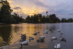 Lago de Palermo, Buenos Aires.