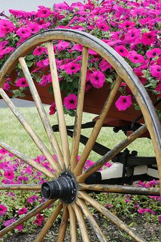 Pink Petunia wagon (1) From: FlickR, please visit