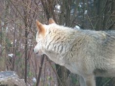 Visiting the Alternative Wolf and Bear Park in the Black Forest
