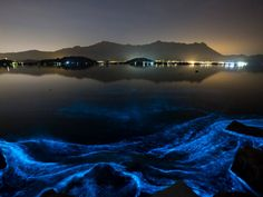 At the Sam Mun Tsai beach in Hong Kong, bioluminescent phytoplankton are found in the water.