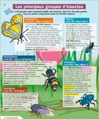 Les principaux groupes d'insectes - Mon Quotidien, le seul site d'information quotidienne pour les 10-14 ans !