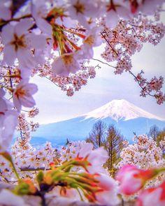 Spring. Volcano. Kamchatka