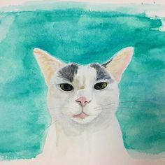 """『六月のハチ』""""Hachi of June """"#cat#blackandwhitecat#animal#catsofinstagram#instacat#catinsta#chat#gatto#pet#catstagram#catlovers#ネコ#猫#ねこ#白黒猫#猫部#catoftheday#ilovecat#beautifulcat#水彩画 #watercolor"""