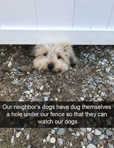 28 Funny Animal Pictures – Funnyfoto | Funny Pictures - Videos - Gifs - Page 6