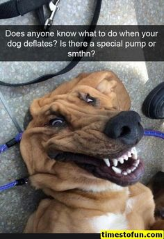 funny memes 60 pictures - #funnymemes #funnypictures #humor #funnytexts #funnyquotes #funnyanimals #funny #lol #haha #memes #entertainment #timestofun.com