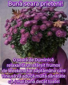 Flower Aesthetic, Flowers, Plants, Sunday, Nice, Rome, Domingo, Plant, Royal Icing Flowers