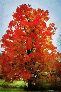 Set on fire! bertsworks.com #fallscene #tree #fallleaves