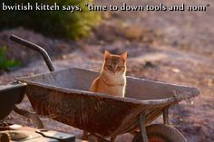 "bwitish kitteh says, ""time to down tools and nom"" http://cheezburger.com/9024254208"