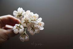 Hong Kong students  and my cherry blossom work. 소중한 인연_ 감사합니다. . .  #cherryblossom #clayflower #clayflowers #clayart #handmade #hellomyspring #flower #flowers #flowerdeco #bloom #sugarflowers #sugar #mystudent  #bouquet #white #hk #클레이 #클레이플라워 #밀랍플라워 #앙금오브제  #작업실  #플라워 #핸드메이드 #코사지  #홍대공방 #연남동작업실 #좋아서하는일 #꽃피우다  #수강생작품 #クレイフラワー