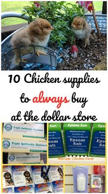 Chicken Coop - - 10 Chicken supplies that you can buy at the dollar store and save a ton of money. Building a chicken coop does not have to be tricky nor does it have to set you back a ton of scratch. Raising Backyard Chickens, Keeping Chickens, Pet Chickens, Backyard Farming, Treats For Chickens, Toys For Chickens, How To Raise Chickens, Nesting Boxes For Chickens, Dust Bath For Chickens