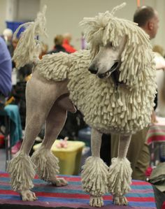 Corded Standard Poodle by mindync, via Flickr