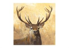 This striking canvas encapsulated a Stags authority and power perfectly. With a murky background the Stag features as the centre point of the canvas and ensures the canvas will make a wonderful and authentic addition to any room. Wall Art Prints, Framed Prints, Canvas Prints, Canvas Paintings, Furniture Village, Barker And Stonehouse, Living Room Lounge, Animal Magic, Nature Artwork