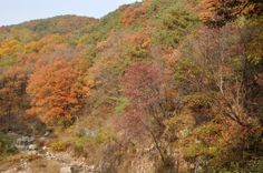 Fall at Kookmin University, the dry pond by SungGok Library