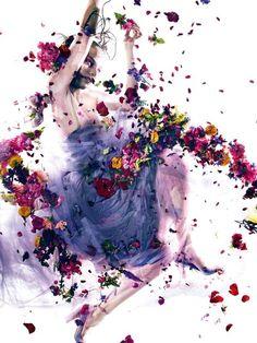 舞う花びらと奥に眠る目力。 by 橘 木竜