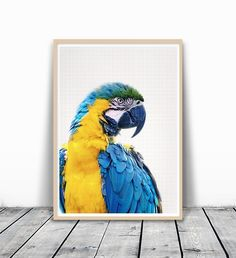 Bird Print, Parrot Print, Animal Head Wall Art, Animal Photography, Colorful Bird Photo, Minimalist Wall Art, animal print, Photography Print, Parrot Photography, Animal Art Print, Rustic Print, 8x10. MotivatedWallArt offers prints on a variety of themes, which gives a modern look to your home. This image is printed on 260 GSM quality photo paper with a glossy finish, and mailed in cardboard mailer envelope. The size is 8 x 10 inch and printed to the edge. Please note that frame is not...