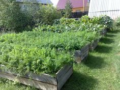 garden design with wooden boxes used for growing vegetables and edible herbs