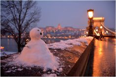 Budapest Bug Budapest Winter, Winter Beauty, Bugs, City, Outdoor Decor, Snow, Beetles, Cities, Eyes