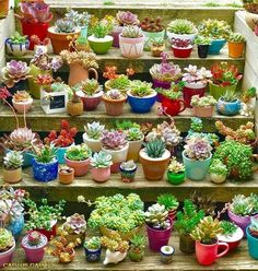 Types of succulents amp how to care it for beginners succulent decorativeplants cactusflowers Types Of Succulents, Growing Succulents, Succulents In Containers, Cacti And Succulents, Planting Succulents, Cactus Plants, Garden Plants, House Plants, Planting Flowers