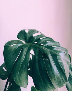 10 perfis no Instagram que todo aficionado por plantas precisa conhecer