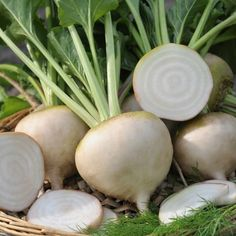 Root Vegetables, Growing Vegetables, Vegetable Garden, Veggies, Garden Insects, Garden Pests, Sugar Ants, Backyard Farming, Plants