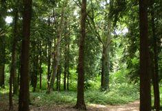 Forêt domaniale de Châtellerault - Châtellerault (86 - Vienne)