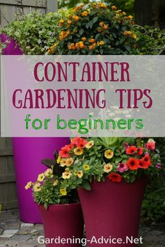 1000 images about creative container gardening on pinterest container garden container - Container gardening for beginners practical tips ...