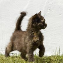 Kitten's outing - Pixdaus