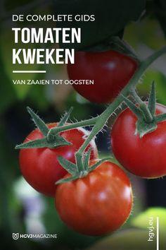 Dream Garden, Garden Art, Garden Design, Home And Garden, Fruit Garden, Vegetable Garden, Garden Plants, How To Harvest Lettuce, Weed Killer Homemade