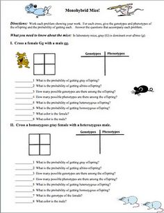 Always FREE! This is a two page worksheet that has 4 monohybrid problems. Each problem requires the student to fill in the Punnett square, fill in a table of genotypes and phenotypes and probabilities, and answer 7 to 8 questions about each problem. Biology Lessons, Science Biology, Teaching Biology, Science Lessons, Science Education, Teaching Tips, Life Science, Science Ideas, Science Projects
