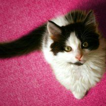 cancer-mama-gatas-outubro-rosa-cachorras