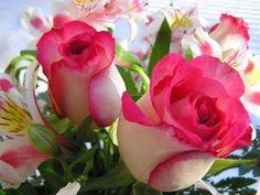 fleurs hd fond ecran
