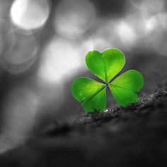 *Lucky Shamrock (Touch of Color)