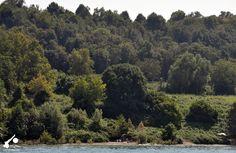 Spiaggia isolata nel verde del Lago di Garda. #VisitLagoDiGarda #LagoDiGarda