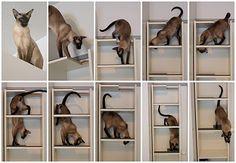 Cat climbing shelf in one compact Billy - IKEA Hackers